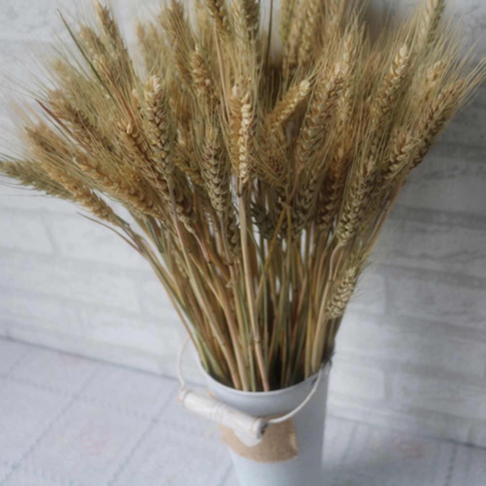 Nuovo 100pcs Autunno Spiga di grano Fiore Naturale Fiori Secchi per la Cerimonia Nuziale Del Partito Della Decorazione di DIY Craft Scrapbook Complementi Arredo Casa Grano Bouquet