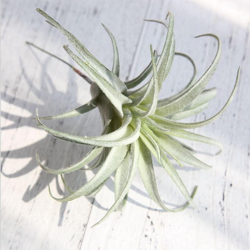 LanLan искусственные ананасовые травы, воздушные растения, искусственные цветы, Украшение стен дома