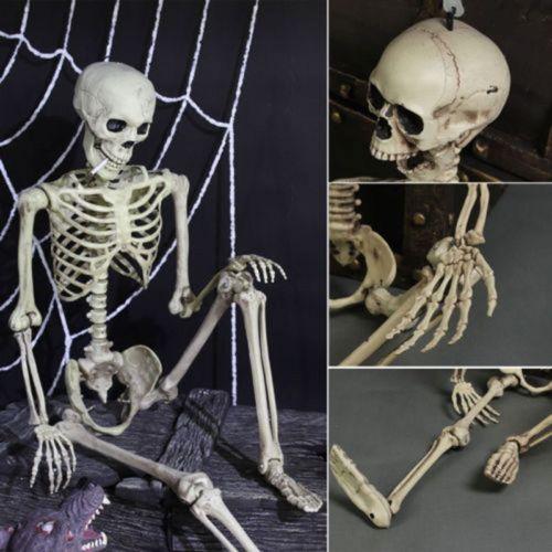 Halloween Fotografía Prop Esqueleto Humano Tamaño Completo Cráneo