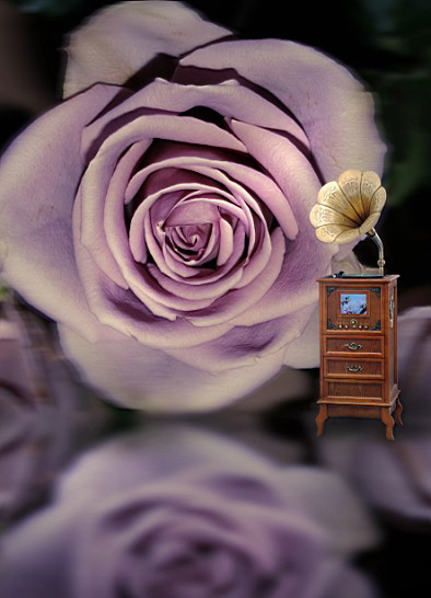 600Cm*300Cm Backgrounds Rose Mural Music Cabinet Drawers Photography Backdrops Photo Lk 1329 Valentine'S Day 600cm 300cm backgrounds painting flowers blooming beauty mother s day photography backdrops photo lk 1428