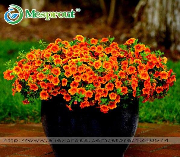 На алиэкспресс семена цветов