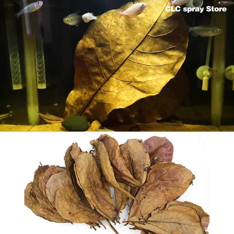 50G  Grade A Terminalia Catappa Foetida Leaves Island Almond Leaf Crystal Shrimp Improve Water Quality