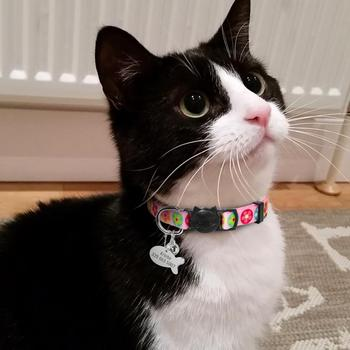 Pet Collars For Cats & Dogs Chihuahua - Yorkie - Poms 23