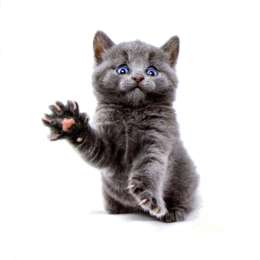 De schattige kat van blauwe ogen Waterproof tijdelijke tattoo Sticker - Tatoeage en lichaamskunst - Foto 1