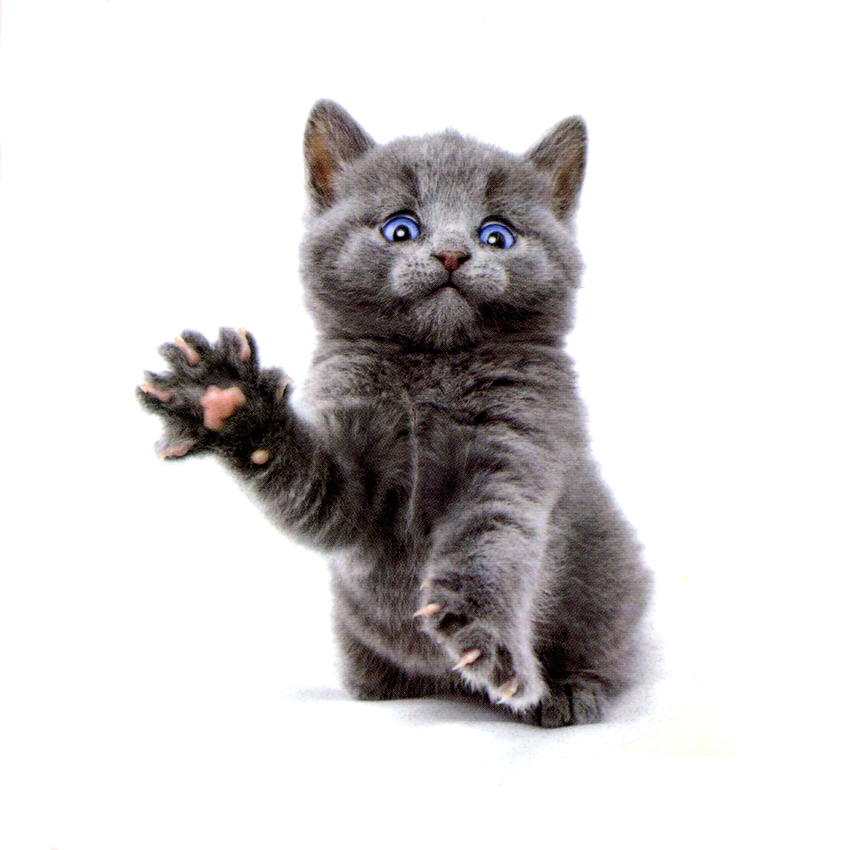 The Cute Cat Of Blue Eyes Waterproof Temporary Tattoos Sticker Body Art Tattoo Beauty Animals Tattoo Sleeves Temporaryt Tatoo