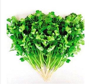 Online Get Cheap Leaf Vegetable -Aliexpress.com   Alibaba Group