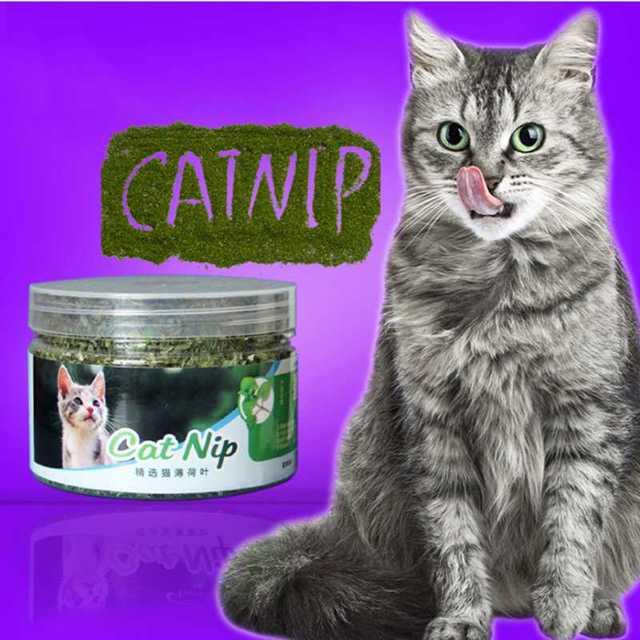 100% Natural Organic Premium Erba Gatta 10g/20/30g Catmint, mentolo Sapore, Dry
