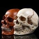 Resin Human Head Min...