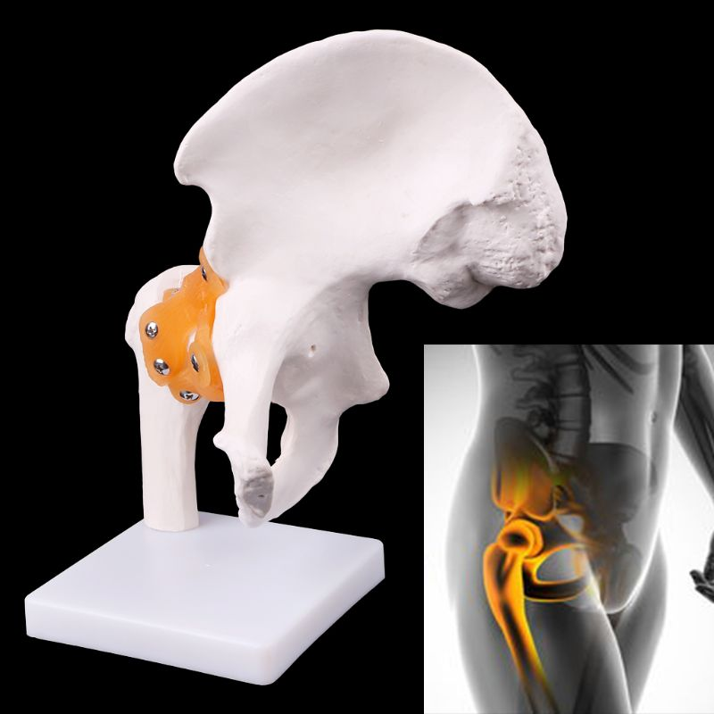 Life Size Ligament Hip Joint Medical Anatomy Model Skeleton Teaching Tool Medical Science Stationery for School human skin model block enlarged plastic anatomical anatomy medical teaching tool medical science stationery for school