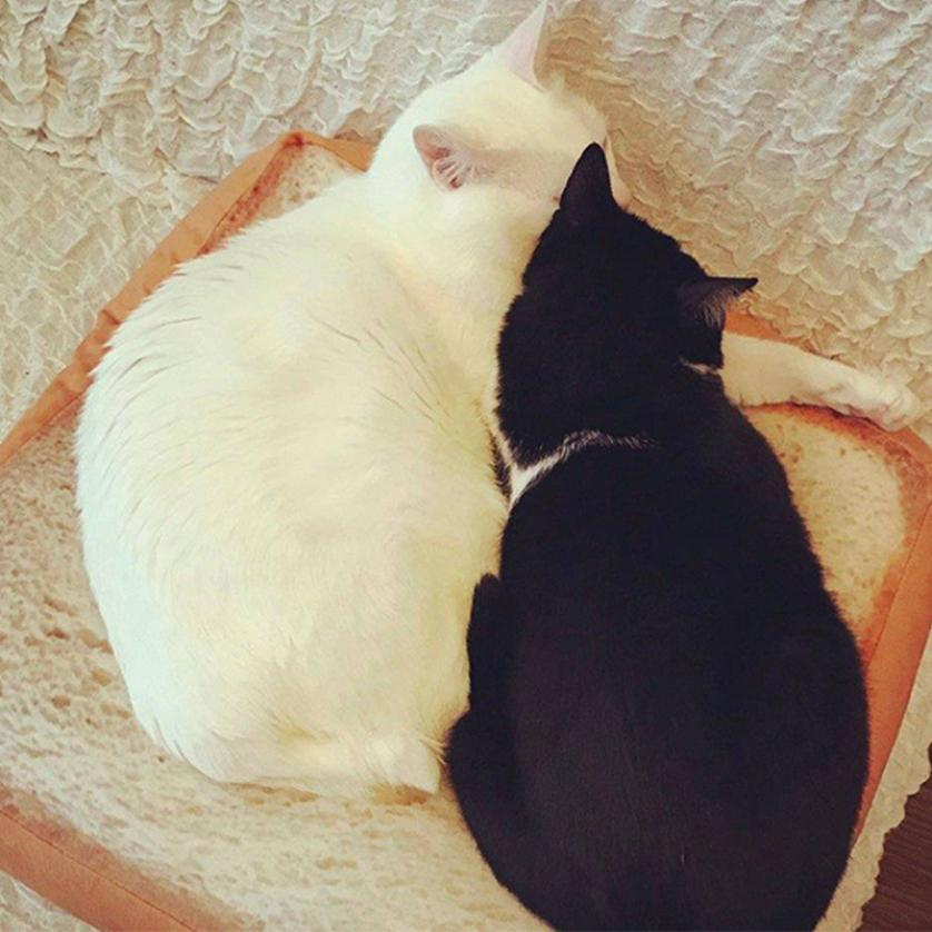 40 40cm square toast pet cat dog cushion sofa bed soft flexible bread kitty cat pillow house small puppy warm rest pad mats sale in cat beds mats from