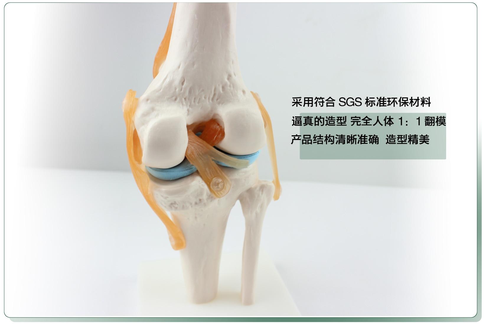 anatomy teaching medical Jersey 1