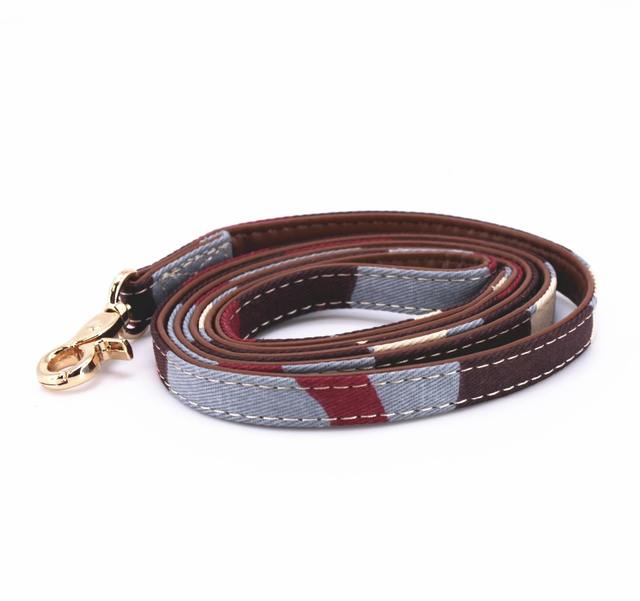 Cat, Dog Collar, Leash