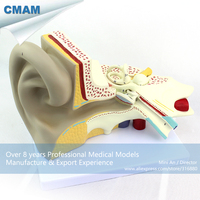 12519 / Human Anatomy Ear Model w/ 3 parts Movable in 6x Life Size, Medical Science Educational Anatomical Models