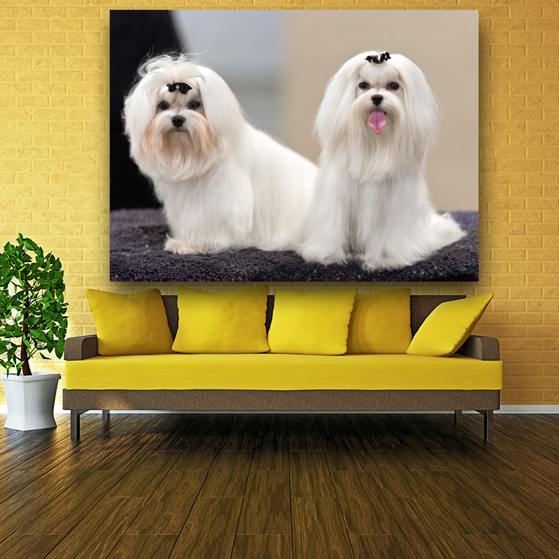 Animal Paintings Two Funny Honest AKC Maltese Dogs Show Painting For ...