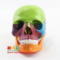 1:2 human Colourful Skull Model Head Bone Biology Anatomical model Medical teaching equipment Manikin 15 Parts