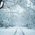 SHENGYONGBAO 10x10ft Снежный Виниловый фон реквизит для фотостудии фон TSN-21