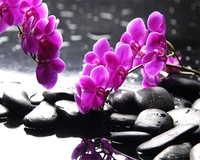 Beibehang Custom Wallpaper Phalaenopsis Orchid Purple Stone Mood SPA Beauty Club Murals Home Decoration Background 3d