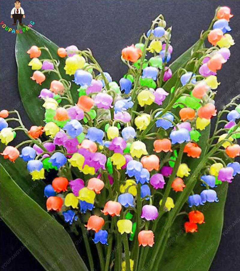 100 шт. ландыши Цветочные растения крытый редкий колокол орхидеи богатый аромат бонсай цветы милые и красивые растения