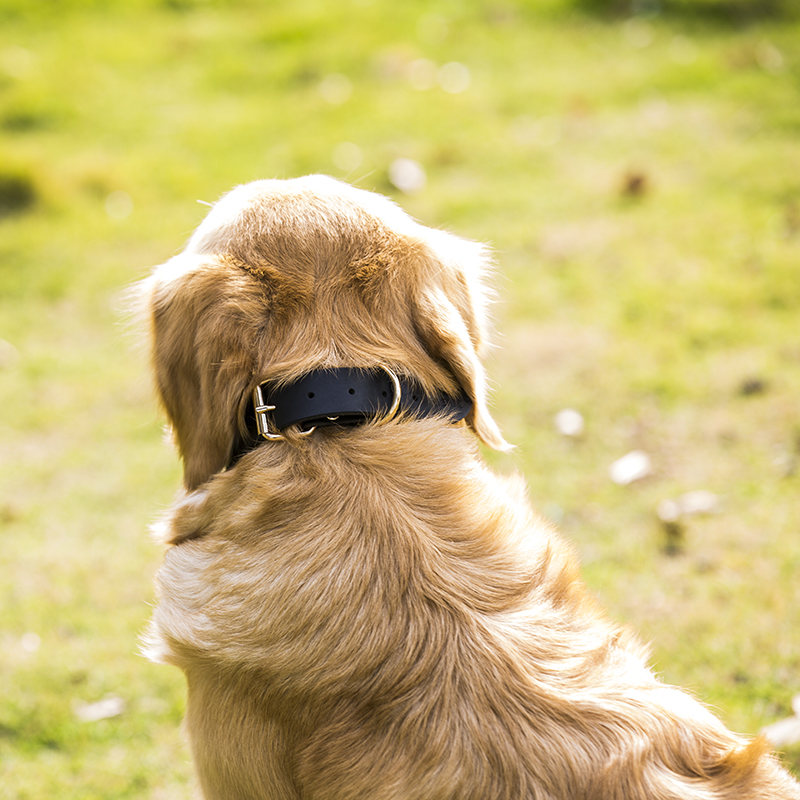 Real Leather Dog Collars Brun Sort Solid Color Prøve Hunde Halskæde - Pet produkter - Foto 6