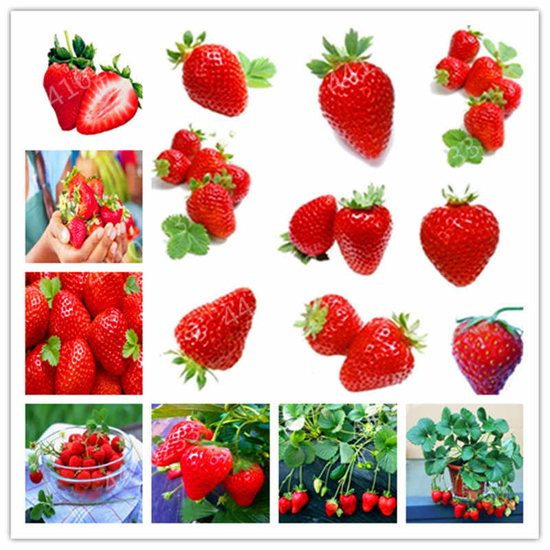 Bonsai 200 Pcs/pack Jepang Gaint Strawberry Berry Manis Buah Outdoor Indoor Tanaman Strawberry Garden Multi Warna untuk Memilih