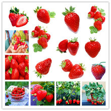 Bonsai 200 Pcs/Pack Japanese Gaint Strawberry Berry Sweet Fruit Indoor Outdoor Plant Strawberry Garden Multi-Color To Choose(China)