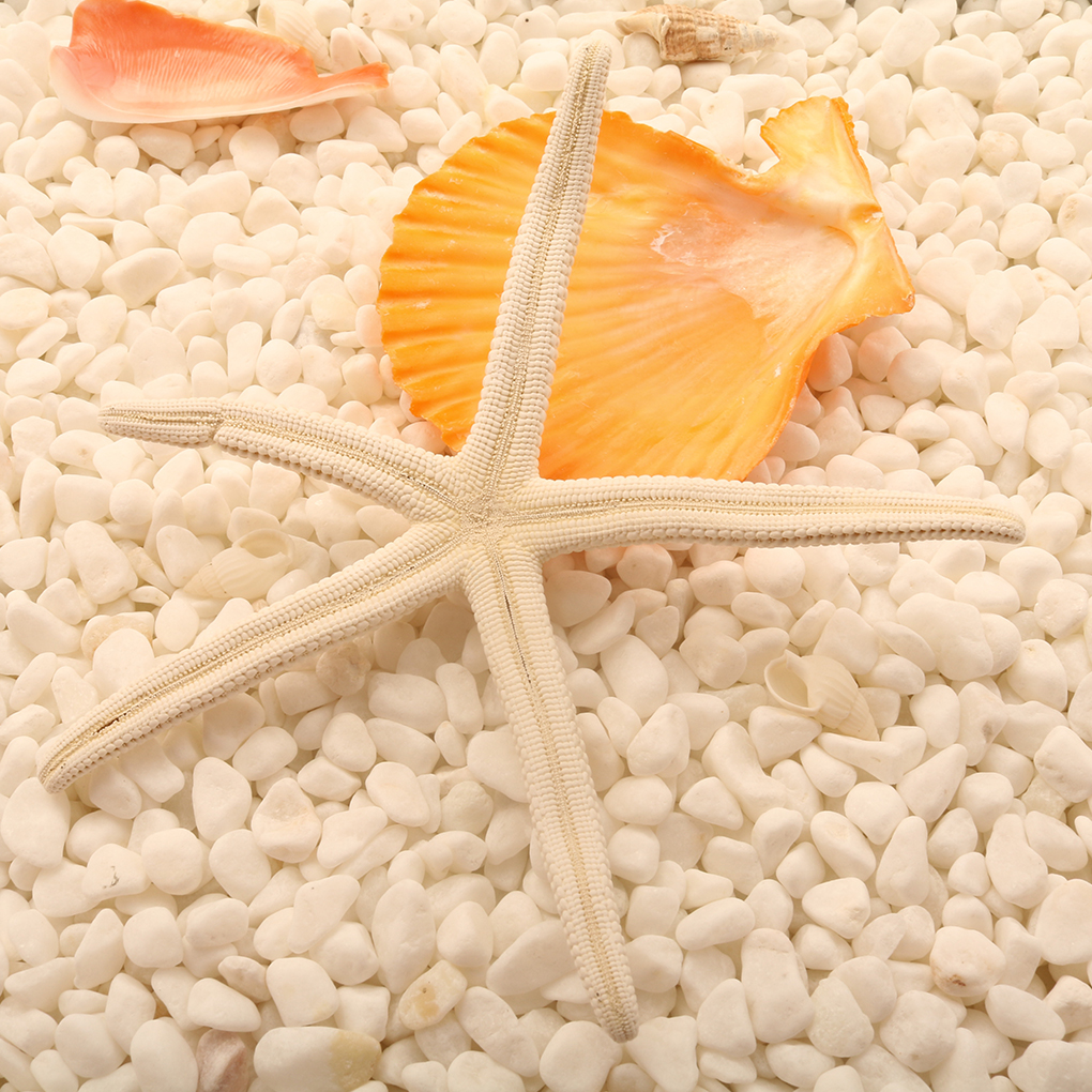 Natural 5-12cm/10-12cm White Finger Starfish Sea Stylish Home Hair Wedding Decor And Craft Project
