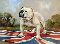 Hand painted oil painting Ferocious cute English Bulldog dog on a British flag