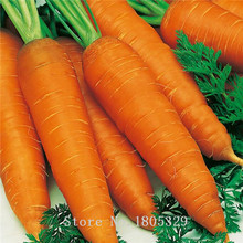 Vegetable seeds Daucus carota carrot seed ginseng Wucun Carrot about 50 pcs bag free shipping