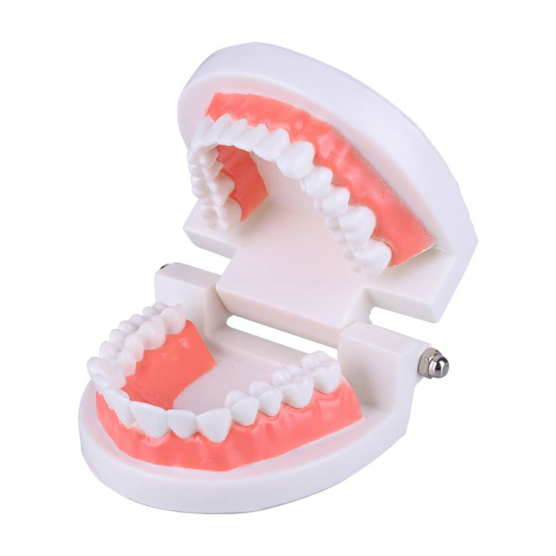 NEW Dental Caries Study Tool Adult Standard Oral Demonstration Teeth Model For Kids Oral Care Teaching 2018