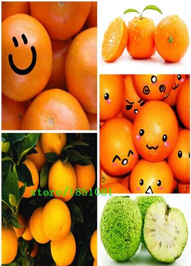50pcs/bag, Balcony patio potted fruit trees planted seeds, kumquat seeds, orange seeds, tangerine, citrus,