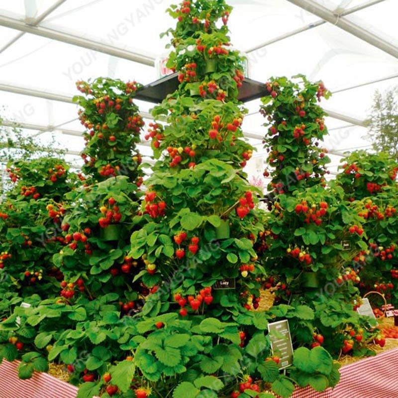 200pcs Rare Blue Strawberry bonsai Outdoor seeds Tree Multi Color Organic Fruit