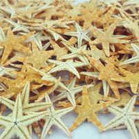 100 Pcs Strand Sterne DIY Schmuckstück Hochzeit Meer Natürliche Schöne Handwerk Tragbaren Fotografie Prop Mini Dekoration Starfishes