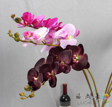 1 Stem Real Touch Latex Artificial Moth Orchid Butterfly Orchid Flower for new House Home Wedding Festival Decoration F472(China)
