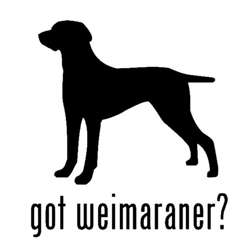Online Shop CM GOT WEIMARANER Pet Hunting Dog Car Stickers - Sporting dog decals