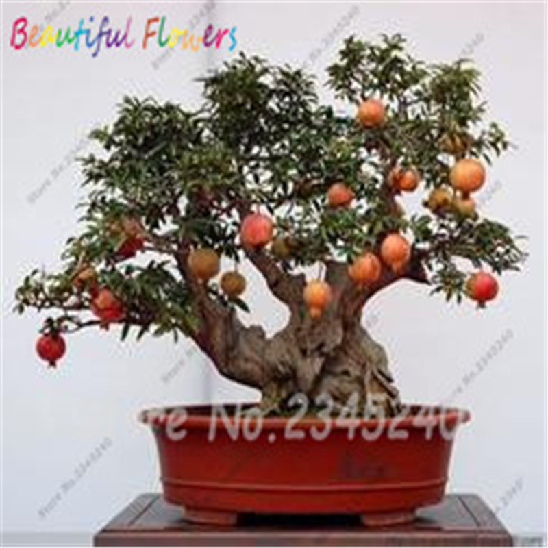 online get cheap mini pomegranate aliexpress  alibaba group, Natural flower