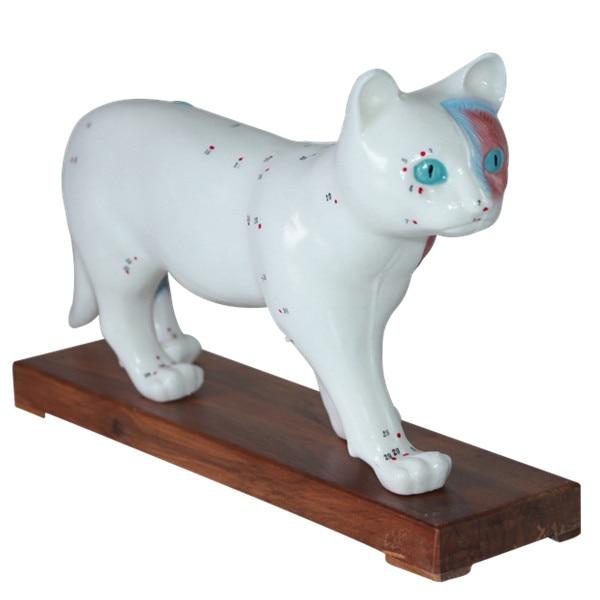 Cat acupuncture model Animal anatomical model Cat acupoint ...
