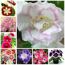 Imported 100 Pcs Rainbow Gloxinia Bonsai Plants Outdoor Perennial Sinningia Gloxinia Flower For Home Garden Pot Easy To Grow(China)