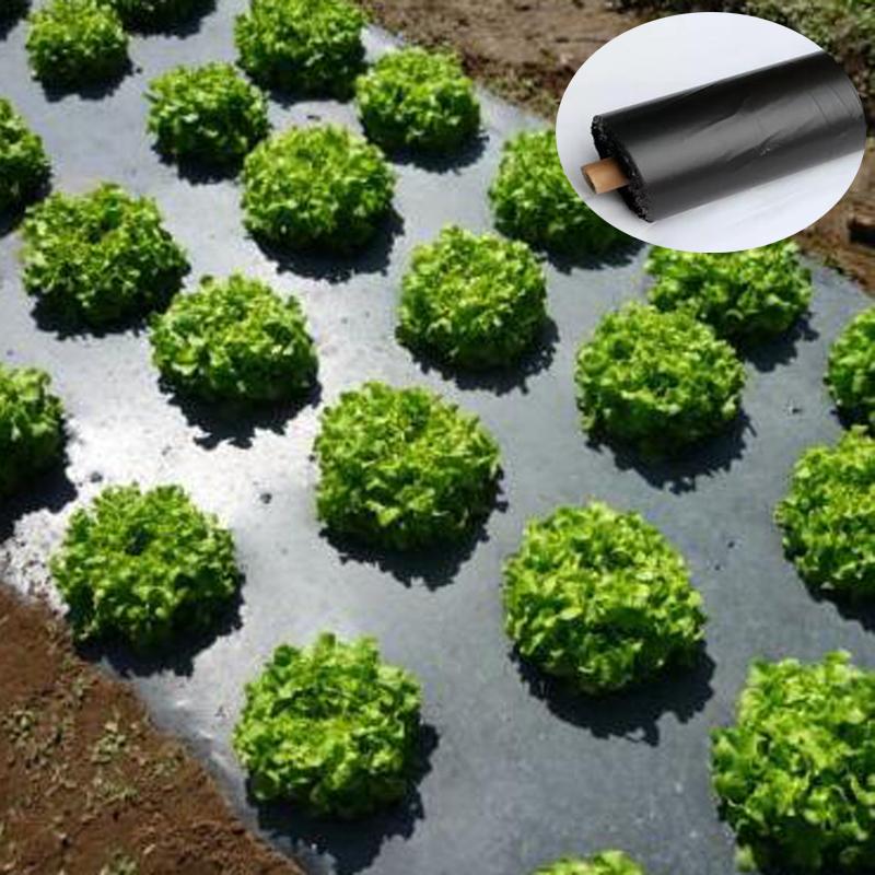 Tewango Biodegradeable Weed Control Mulch Film Allotments Vegetable Patch Borders Insect Prevention 1.2s PE Films