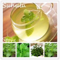 Mint-Mentha-Seeds-200-particles-NON-GMO-Fresh-Culinary-Medicinal-Seeds-For-Home-Garden-Planting-Easy.jpg_200x200