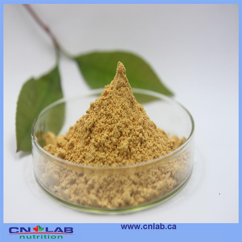 Natural High Quality Ginkgo Biloba Extract with 24% Flavones by HPLC Ginkgo Powder 250g free Shipping