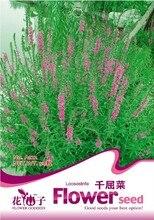Цветок Lythrum salicaria Семена, оригинальной Упаковке 50 шт. Сад бонсай Лекарственные растения семена цветов, легко Выращивать Фиолетовый Lythrum Травы