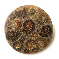 Wholesale 1PC 10cm Ammonite Fossil Slice Plate Natura Shell Madagascar Fossil Specimen Stones and Crystals