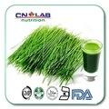 Envío Libre 1 KG orgánica polvo de alfalfa Alfalfa Extracto en polvo