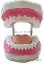 Free shipping Dental Teaching for children to learn to practice brushing teeth model with toothbrush odontologia