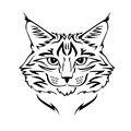 14*15 CM Gato Raza Maine Coon Gatito Mascota Animal Clásico de Dibujos Animados Decoración de La Ventana Etiqueta Engomada Del Coche Del Vinilo C4-0592