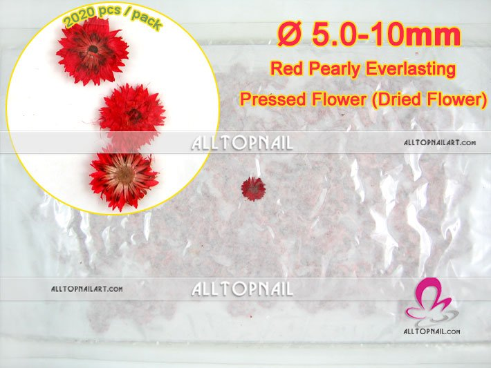 Anaphalis Margaritacea Red Pressed Flower 2020pcs/pack Nail Art Pearly Everlasting Real Dried Flower - Free shipping