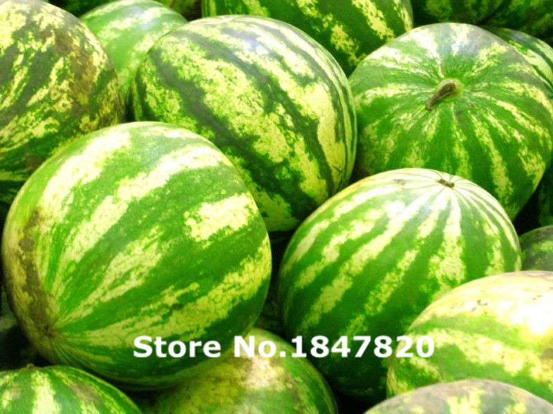Free Shipping Vevetable seeds 30 pcs Watermelon Seeds . Heirloom from Romania