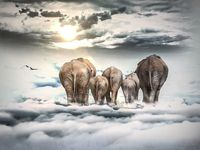 perfact oil painting handpainted on canvaselephants walking in the sky