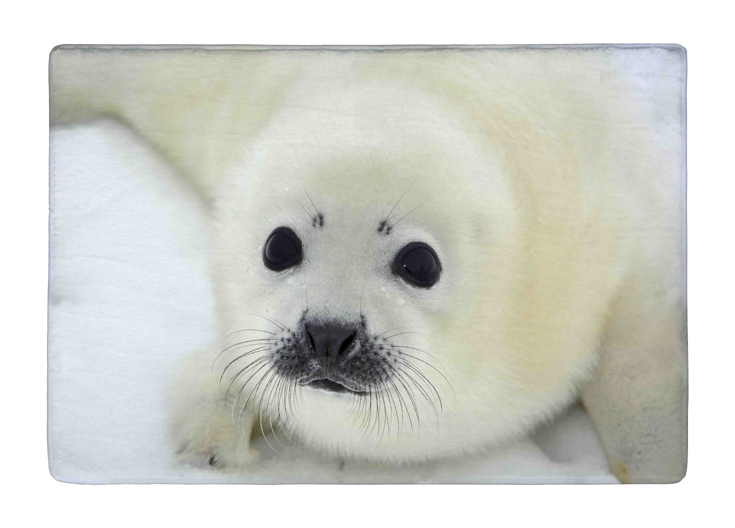 Floor Mat Cut Baby Harp Seal Pup On Ice of The White Sea Print Non slip