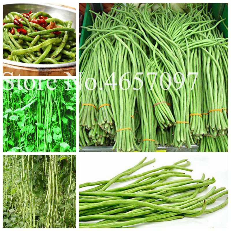 50 Pcs/ Bag Chinese Long Bean Vigna Unguiculata Plant Long-Podded Cowpea Tasty Snake Bean Vegetable Garden Long Bean Planta